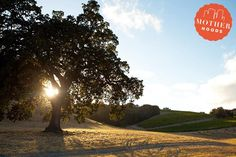 Mother Hoods: Paso Robles, A Kid-Friendly Pit Stop On The 101 | Mother | Bloglovin'