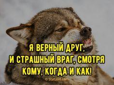 Волки Девиз, Лайфхаки, Песни, Мотивация, Цитаты