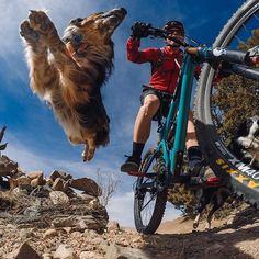 Photo of the Day! Tula coming at ya! @harebrainbob has mastered the #flyingdog shot.