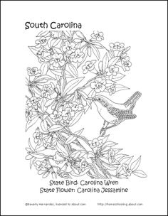 61 Best South Carolina History 3rd Grade images in 2016