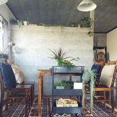 oga_mihiさんの、観葉植物,無印良品,照明,IKEA,雑貨,100均,DIY,多肉植物,ニトリ,salut!,3Coins,植物のある暮らし,瓶と植物,のお部屋写真