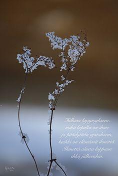 Dandelion, Flowers, Plants, Dandelions, Florals, Plant, Royal Icing Flowers, Blossoms, Bloemen