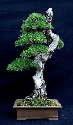 me is a german male born in 1976. i like bonsai.