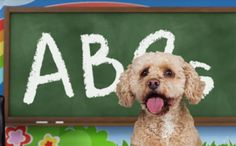 And she's available for tutoring http://barkpost.com/discover/lizzy-the-dog-alphabet-1?utm_campaign=barkboxfb&utm_source=facebook&utm_medium=social