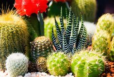 easy plants to grow indoors cacti varieties indoor garden