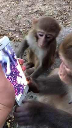 funny monkey -cycheatpoker - Funny Monkeys - Funny Monkeys meme - - The post funny monkey -cycheatpoker appeared first on Gag Dad. Baby Animal Videos, Funny Animal Videos, Cute Funny Animals, Animal Memes, Cute Baby Animals, Funny Cute, Funny Dogs, Animals And Pets, Funny Monkeys