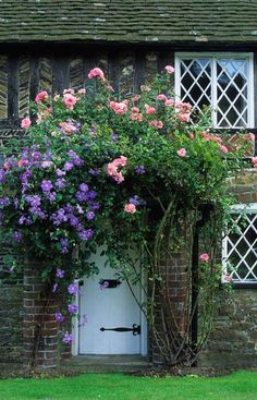 Rosa 'Bantry Bay' and Clematis 'Perle D'Azur' growing round front door porch