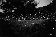 Fireflies. Gregory Crewdson, Untitled, 1996, © Gregory Crewdson. Courtesy Gagosian Gallery