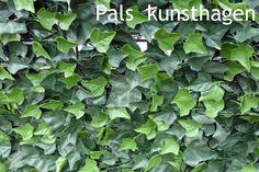 De mooiste en beste kwaliteit kunsthaag treft u op de website van Pals Kunsthagen www.kunsthaag-kopen.nl