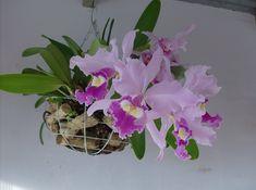 Exotica belleza de la Orquidea