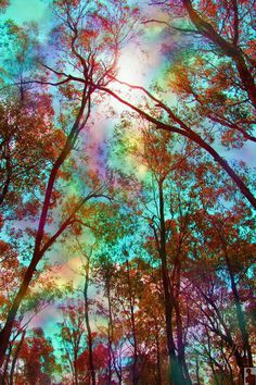 Rainbow through the trees is part of Beautiful nature wallpaper - Beautiful Nature Wallpaper, Beautiful Moon, Beautiful Landscapes, 3d Nature Wallpaper, Trippy Wallpaper, Galaxy Wallpaper, Wallpaper Backgrounds, Wallpaper Art, Fantasy Landscape