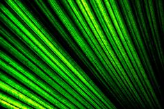Palm Leaf - lush and green