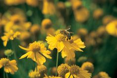 Advice on how to make your garden bee-friendly in summer, from the experts at gardenersworld.com.
