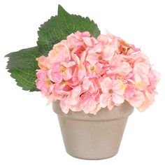 Gardening on pinterest succulents houseplant and plants - Care potted hydrangea ...