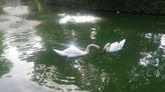 Bird, Animals, Sevilla, Animais, Animales, Animaux, Birds, Animal, Dieren