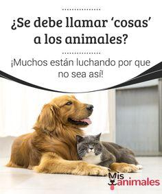 ¿Se debe llamar 'cosas' a los animales? ¡Muchos están #luchando por que no sea así!  Una cosa tenemos clara: los #animales son #animales y no personas. Pero, ¿está bien considerarlos como cosas? Muchos #gobiernos creen que sí. Por ello muchas #asociaciones está luchando para cambiar eso.