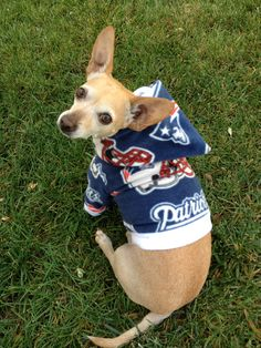 NFL New England Patriots Custom Dog Hoodie #Patriots I like the dog but I like the outfit better:)