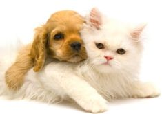 How to Get Rid of Fleas - House and Pets
