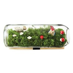 This modern take on the terrarium is composed of a moss micro ecosystem in a recycled wine bottle that adds life to the dull office. Moss Terrarium, Terrariums, Bottle Terrarium, Terrarium Figurines, Little Gardens, Moss Garden, Green Life, Indoor Plants, Indoor Gardening