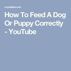 How To Feed A Dog Or Puppy Correctly - YouTube