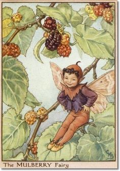 cicely-mary-barker-fairies-of-the-trees-the-mulberry-fairy