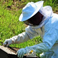 Learn about beekeeping and all things bee with Beekeeper Charlotte at Carolina Honeybees. Honey Bee Swarm, Honey Bee Hives, Honey Bees, Shade Perennials, Shade Plants, Building A Beehive, Shade Grass, Bee Boxes, Backyard Beekeeping
