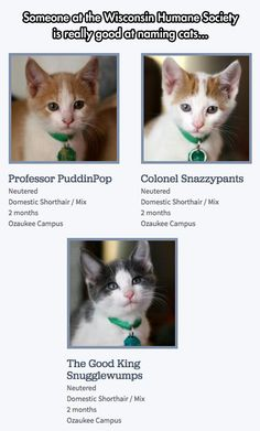 Oh MY gawd!  Kitty babies!  So much cute!  Let us show you that you are pawerless in the face of such adorable!