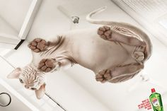 Motor Master Floor Disinfectant: Cat     What is on your floor is not alsways on your mind.  Advertising Agency: Grey, Mexico  #ads #advertising #media #advertisement #marketing #poster #print #campaign #creative #creativity #cat