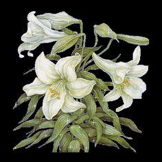 Gifs HERMOSOS: פרחים מצאו en la אינטרנט