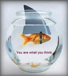 You are what you think!D big fish in a small tank! lol :D Think Big, What You Think, Funny Animal Pictures, Funny Animals, Adorable Animals, Quote Pictures, Random Pictures, Animal Pics, New Age