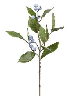 Artificial Blueberry Spray in Light Blue - Tall Fake Flowers, Flowers Nature, Pretty Flowers, Artificial Flowers, Silk Flowers, Botanical Illustration, Botanical Prints, Ikebana, Floral Illustrations