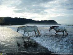 Cavalo Marinho, ENTENDEU???? #ryzoz