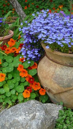 Nasturtium with Lobelia--such a great combination! Also add the nasturtium buds and flowers to your tossed salads. Beautiful Flowers, Garden Art, Beautiful Gardens, Garden Containers, Garden Pots, Nasturtium, Plants, Planting Flowers, Garden Inspiration
