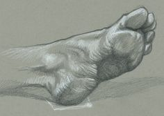 7 x 5 Graphite and white charcoal on grey toned paper. About 30 minutes.