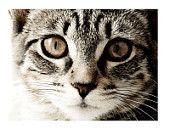 Heartwarming Kitties Treasury on Etsy #treasury #etsy #cats #kitties #siamesecat #mainecooncat #catwatercolor #catphoto #catportrait #sleepingkitties #giftideas #theclassyjewelrybox