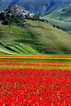 Castelluccio, Umbria, Italy #italy #italia #travel