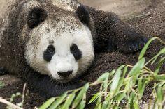 Yun Zi gets down and dirty..... | Rita Petita | Flickr
