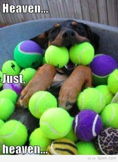 that's what our rottie loves best.... tennis balls