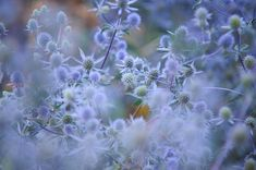 Blue Infinity Photograph by Jenny Rainbow Art Prints For Home, Home Art, Fine Art Prints, All Flowers, Beautiful Flowers, Blue Plants, Art Market, Natural Wonders, Wall Signs