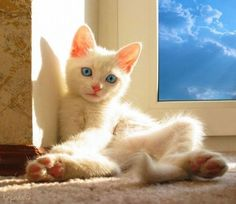 """""""If there is one spot of sun spilling onto the floor, a cat will find it and soak it up."""" --Joan Asper McIntosh"""