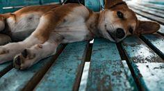 #Ahora ya sabemos por qué los perros son mejores mascotas que los gatos - Infobae.com: Infobae.com Ahora ya sabemos por qué los perros son…