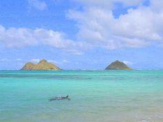 DONE! Swim with sea turtles at Lanikai (Oahu). (2011)