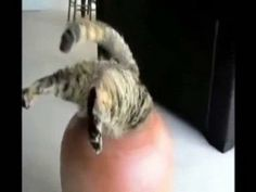Funny Cats and Cute Kittens are how to bring a smile to your face. These Funniest and Best Videos in this epic will make you laugh at the Pets, Paws and Claws. From ninja cat to babies and comedy,