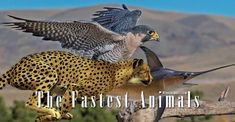 The fastest animals – on land, in water and in the air