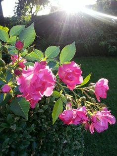 in my backyard Backyard, Plants, Jewelry, Patio, Jewlery, Jewerly, Schmuck, Backyards, Jewels