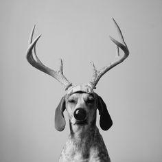 cerforet, un chien ?