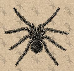 how to draw a tarantula step by step