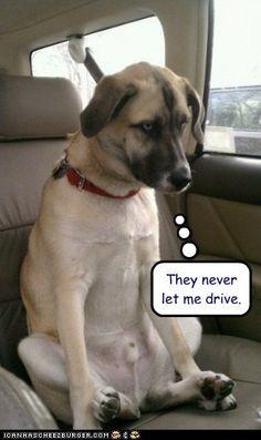Ils ne me laisseront jamais conduire !