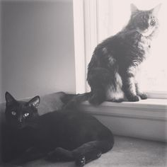 If our cats were musicians this would be their debut album cover.