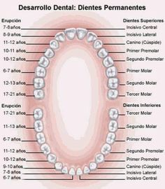 Solution of How to Get Rid of Stains And Solve A Discoloration on Your Teeth Anatomy of A Tooth Pinned by www.Hagen-Anatomy of A Tooth Pinned by www. Dental Assistant Study, Dental Hygiene School, Dental Hygienist, Dental Implant Surgery, Teeth Implants, Dental Terminology, Nursing Goals, Dental Anatomy, Human Teeth
